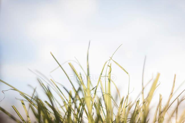 Verde grama crescendo ao ar livre — Fotografia de Stock