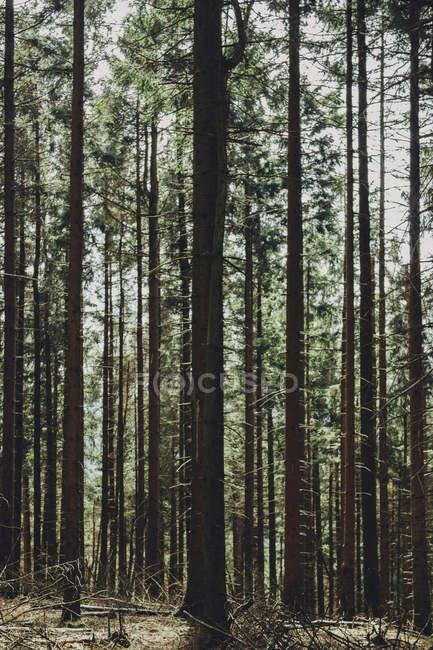 Красивый летний лес — стоковое фото