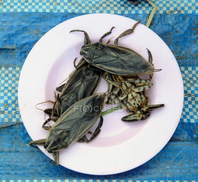 Grandes bichos muertos en plato blanco - foto de stock