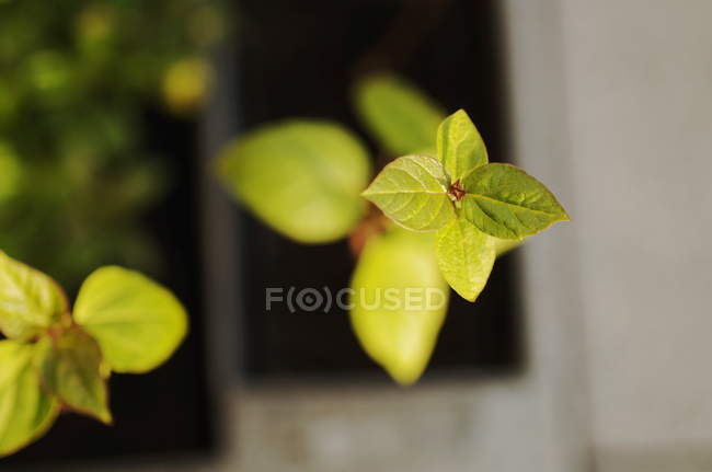 New green plant leaves — Stock Photo