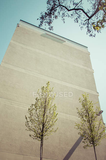 Exterior shot of building facade wall and two tiny trees — Stock Photo