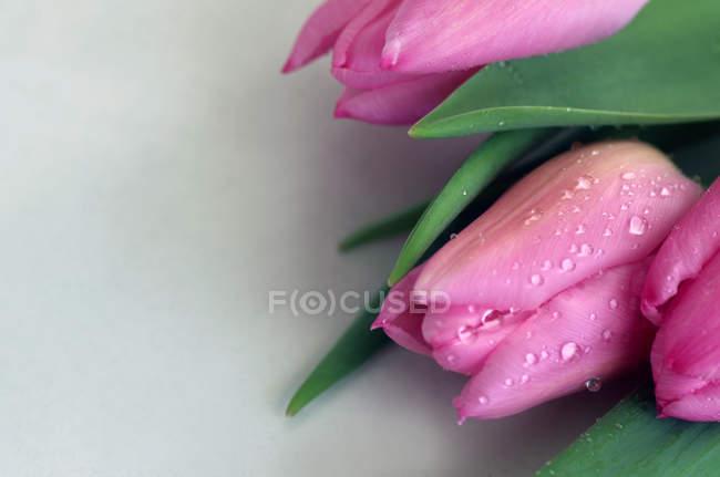 Fiori freschi tulipano — Foto stock
