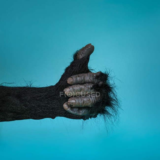 Main de gorilles montrant le pouce vers le haut — Photo de stock