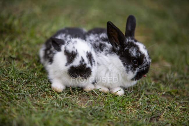 Вид спереди кроликов на лугу — стоковое фото