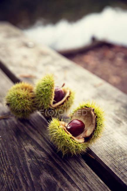 Cabeças de semente da castanha na madeira — Fotografia de Stock