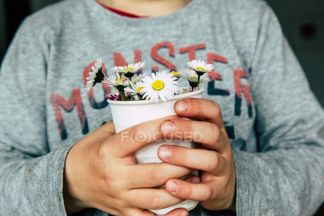 Close-up view of hands holding daisies in cup — Stock Photo