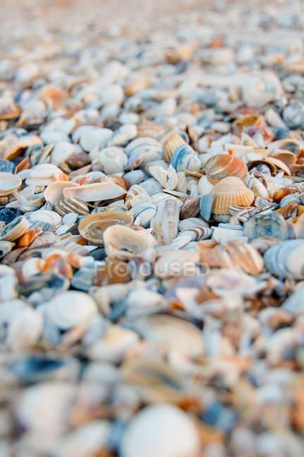 Durante o dia vista closeup de conchas e o monte do seixo — Fotografia de Stock