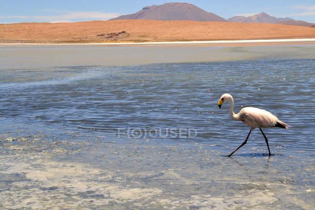 Flamingo Seitenansicht und Salz Seeblick mit Bergen im Hintergrund — Stockfoto