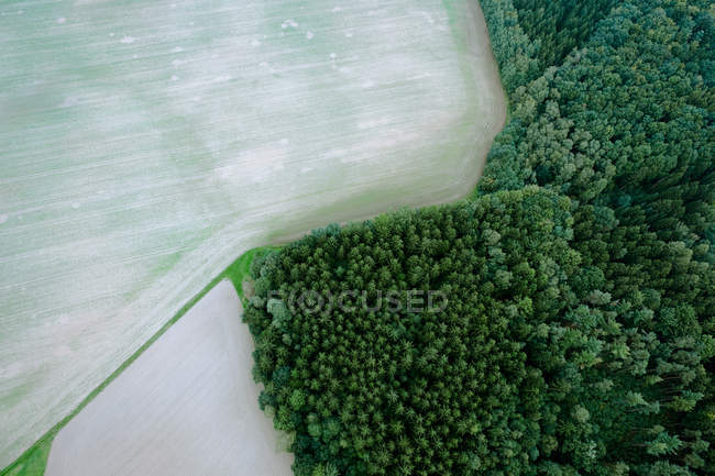 Aerial view on landscape with greenery trees — Stock Photo