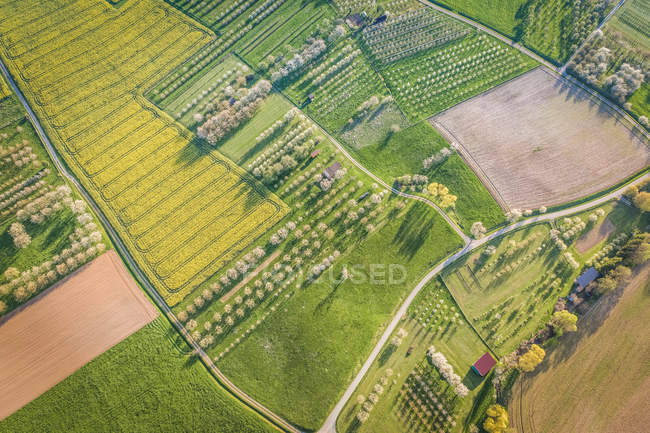 Field and fruit gardens aerial view — Stock Photo