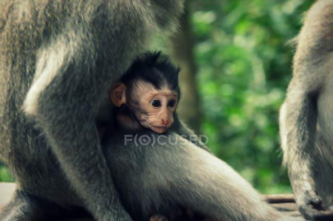 Close-up do bebê macaco sentado no jardim zoológico — Fotografia de Stock