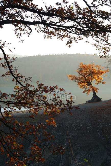Осенние озера пейзаж с красочные деревьев — стоковое фото