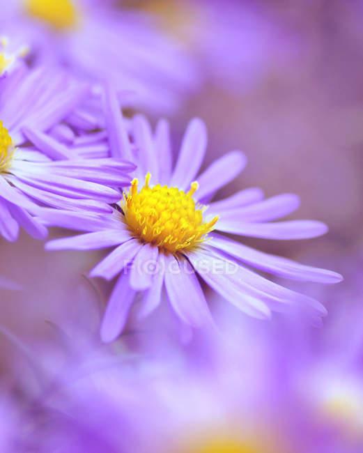 Nahaufnahme der Blüte Blütenknospe — Stockfoto