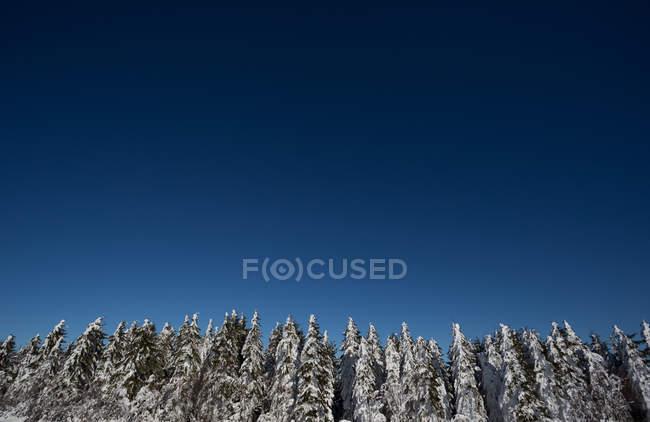 Дикие зимний лес — стоковое фото