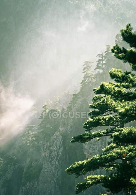 Вид на лес горы в туманной погоды — стоковое фото