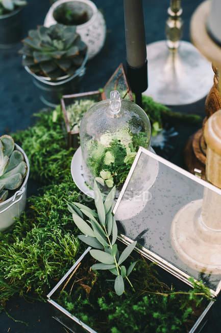 Portion Tischdekorationen mit Moos — Stockfoto