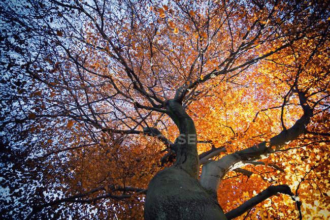 Желтые листья на ветвях деревьев — стоковое фото