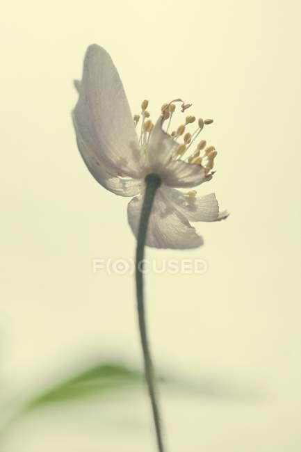 Крупным планом нежный цветок цветок, вид снизу — стоковое фото