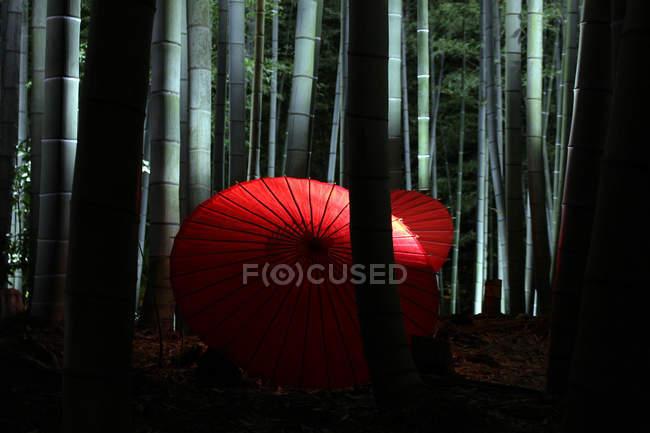Parapluies japonais traditionnels — Photo de stock
