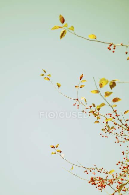 Ramas de árboles con hojas - foto de stock