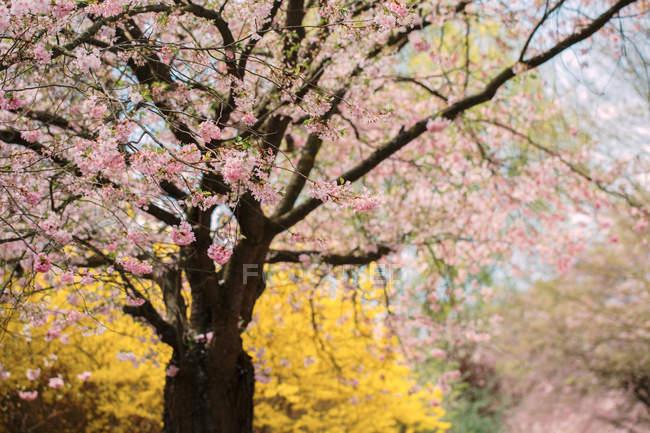 Весна-цветущий сад — стоковое фото