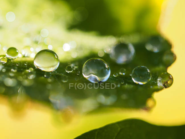 Transparent dew drops — Stock Photo