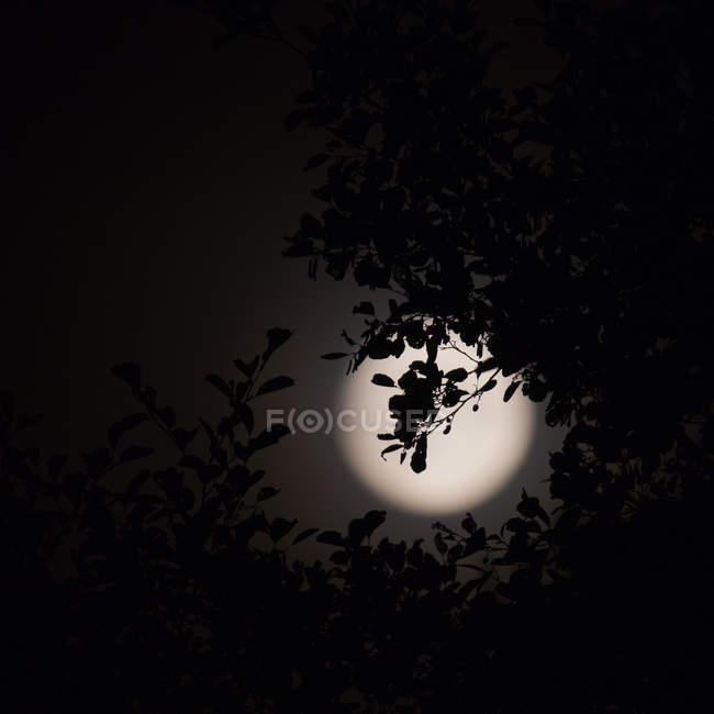 Lua cheia vista entre ramos de árvore contra o céu escuro — Fotografia de Stock