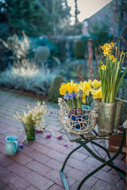 Potted yellow narcissus flowers in the backyard — Stock Photo