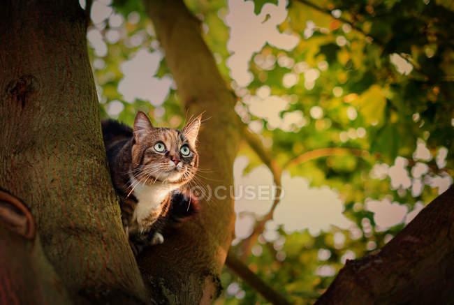 Katze sitzt im Baum — Stockfoto