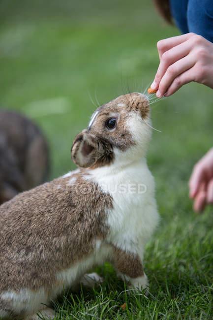 Вид сбоку лица кормления кроликов на лугу — стоковое фото