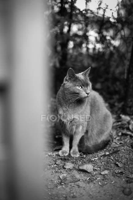 Gato sentado no chão — Fotografia de Stock