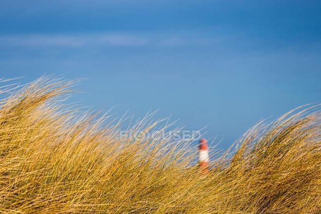 Paisagem com grama do marram e sinal — Fotografia de Stock