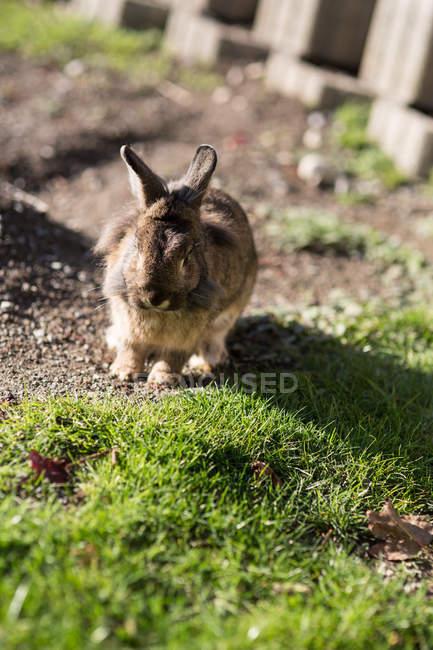 Вид спереди кролика на зелёный луг — стоковое фото