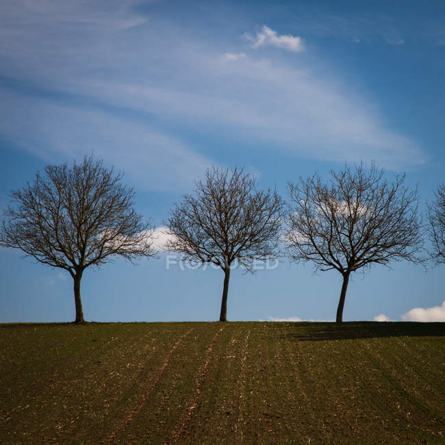 Nature landscape with scenic field view and trees — Stock Photo