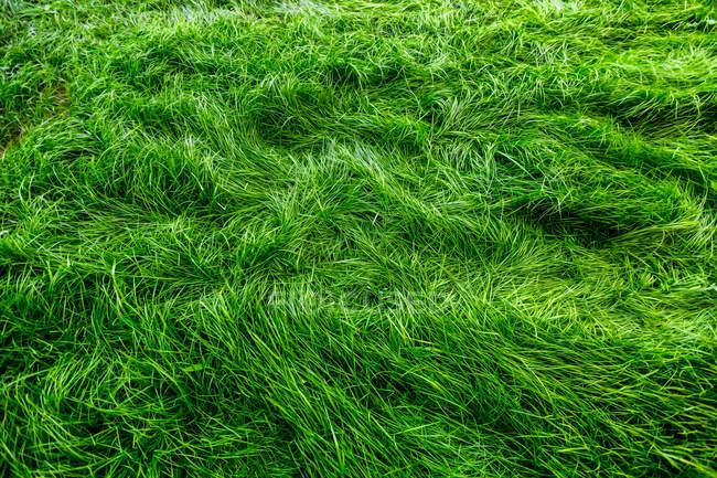 Ярко зелёная трава луг — стоковое фото