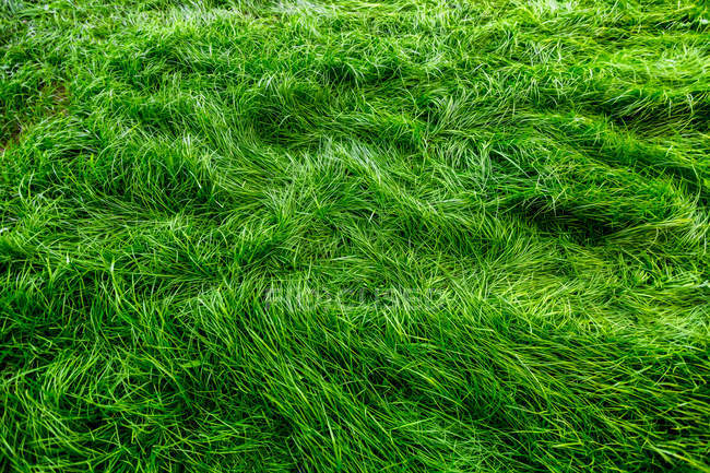 Bright green grass meadow — Stock Photo