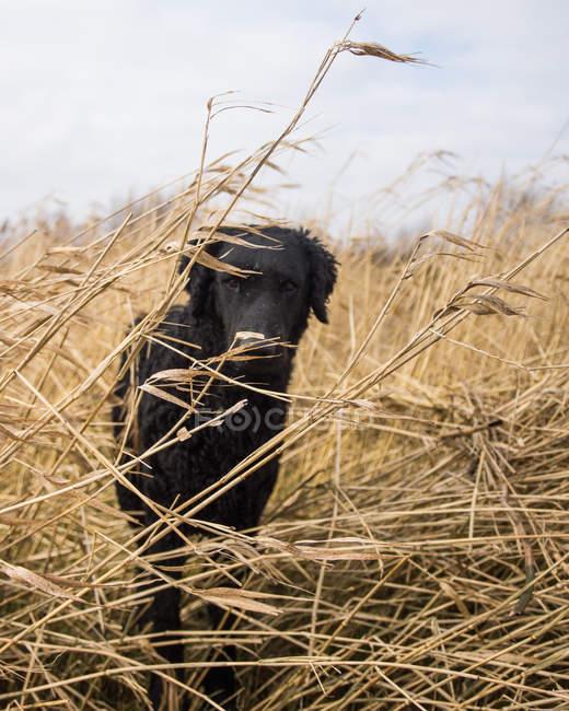 Вид спереди собак в высокой траве — стоковое фото