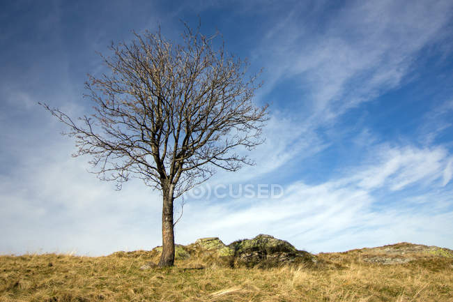 Field view and tree on hill — Stock Photo