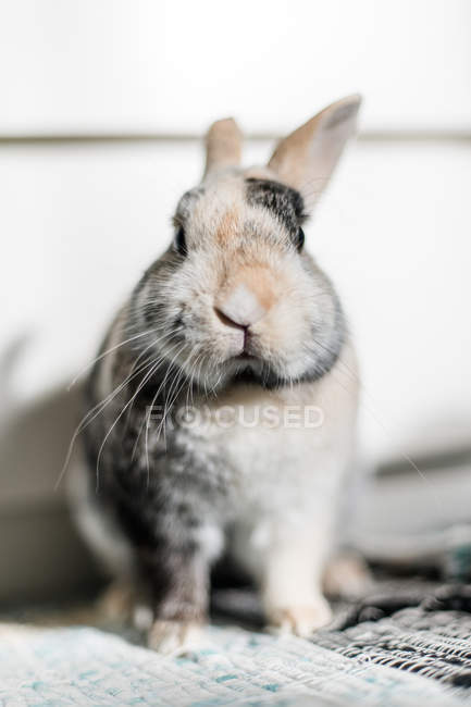 Close-up view of rabbit looking in camera — Stock Photo