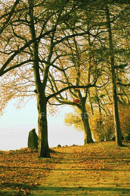 Осенний лес с ручья и деревья — стоковое фото