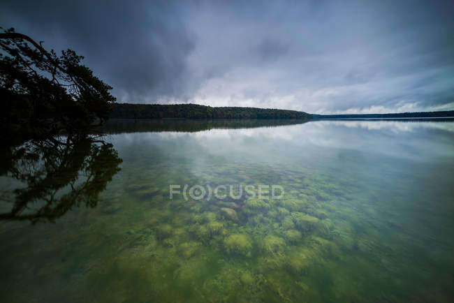 Landscape with forest pond — Stock Photo