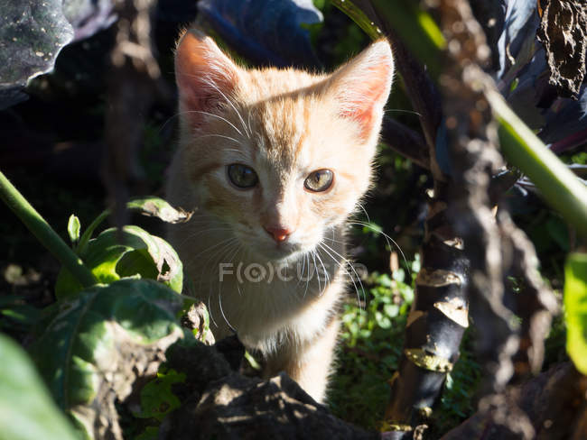 Kitten standing surronded by plants — Stock Photo