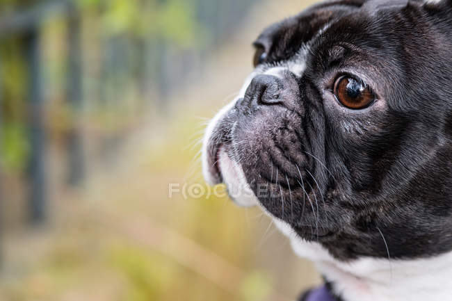 Pet dog looking aside — Stock Photo