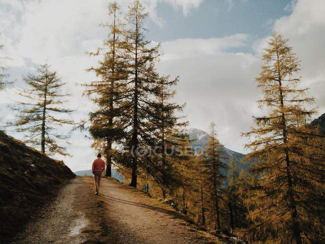 Uomo del viaggiatore a piedi nel sentiero di montagna con alberi di pino — Foto stock