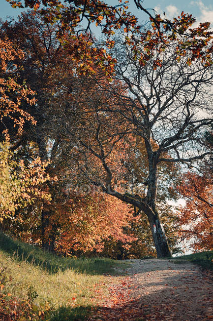 Осенние листья на деревьях в лесу с тропинка — стоковое фото