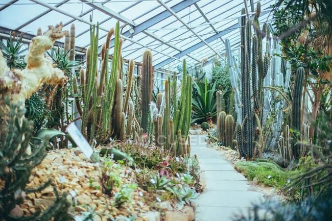 Outdoor-Szene mit Kaktus — Stockfoto