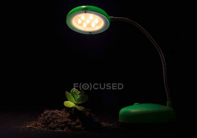 Young sprout in soil and table lamp on black background — Stock Photo