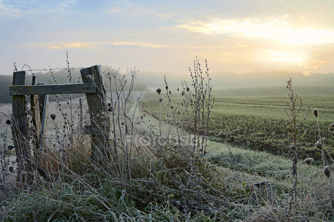 Scenic field view in morning — Stock Photo