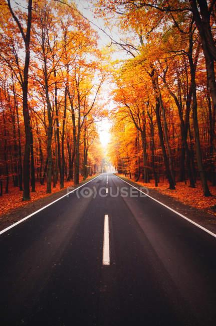 Asphalt road in autumn forest — Stock Photo