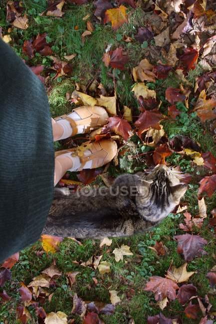 Piedini femminili e gatto marrone — Foto stock